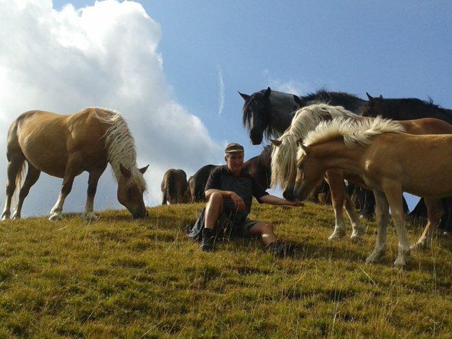 pferde-nemast (2)
