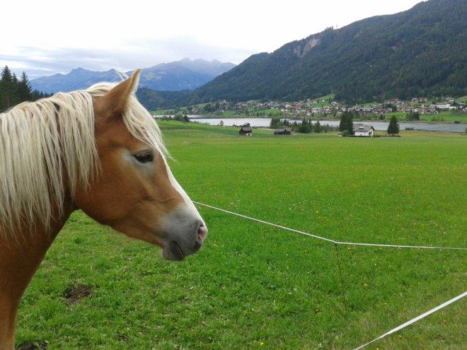 pferde-nemast (3)