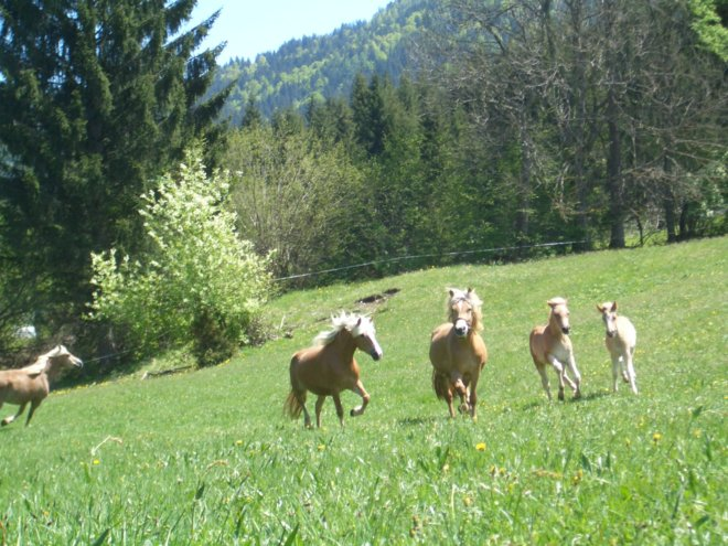 pferde-nemast (5)