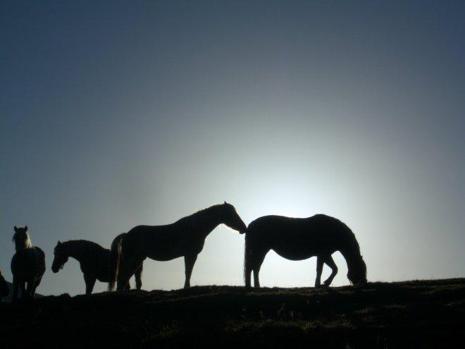 pferde-nemast (6)