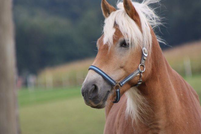 pferde-nemast (7)